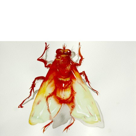 Red Fly, 1998. 35 x 50 cm.
